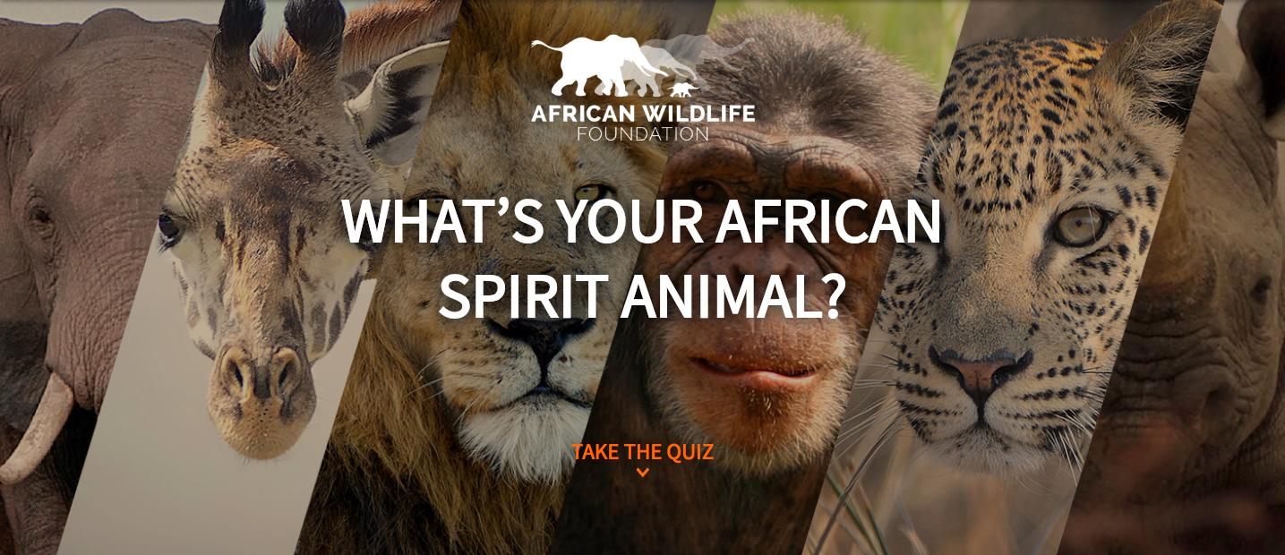 African Wildlife Society example