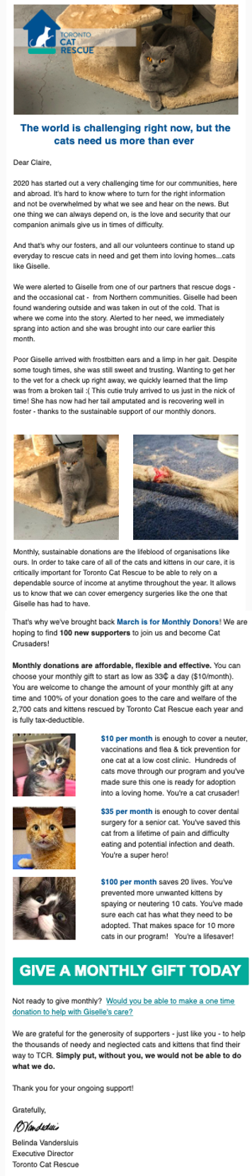 Toronto Cat Rescue fundraising appeal during pandemic