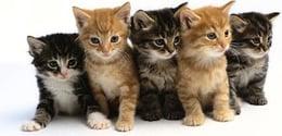 pack_of_kittens.jpg