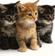 recruit-new-donors-and-advocates-for-nonprofits-and-brands---pack-of-kittens